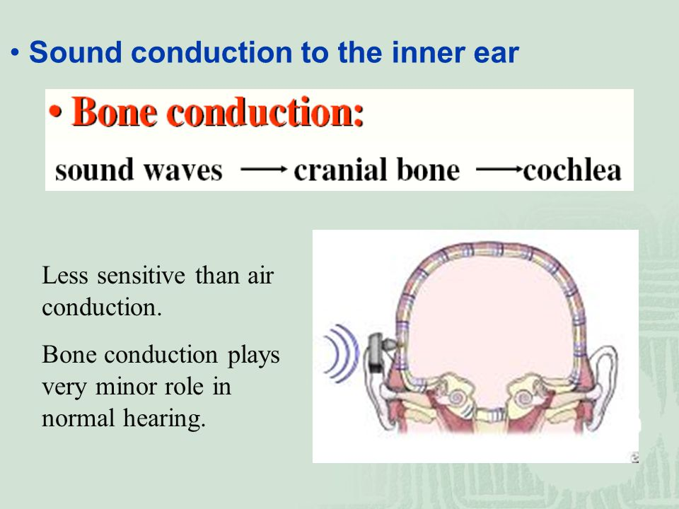 Sound conduction to the inner ear