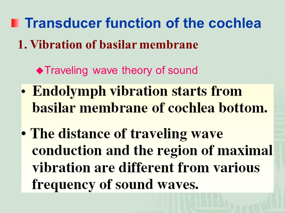Transducer function of the cochlea
