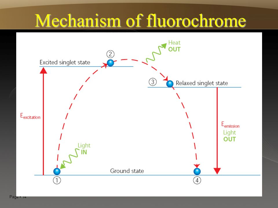 Mechanism of fluorochrome