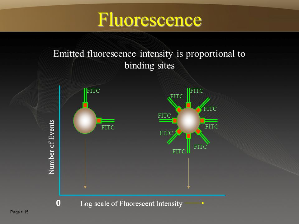 Fluorescence Emitted fluorescence intensity is proportional to binding sites. FITC. FITC. FITC. FITC.