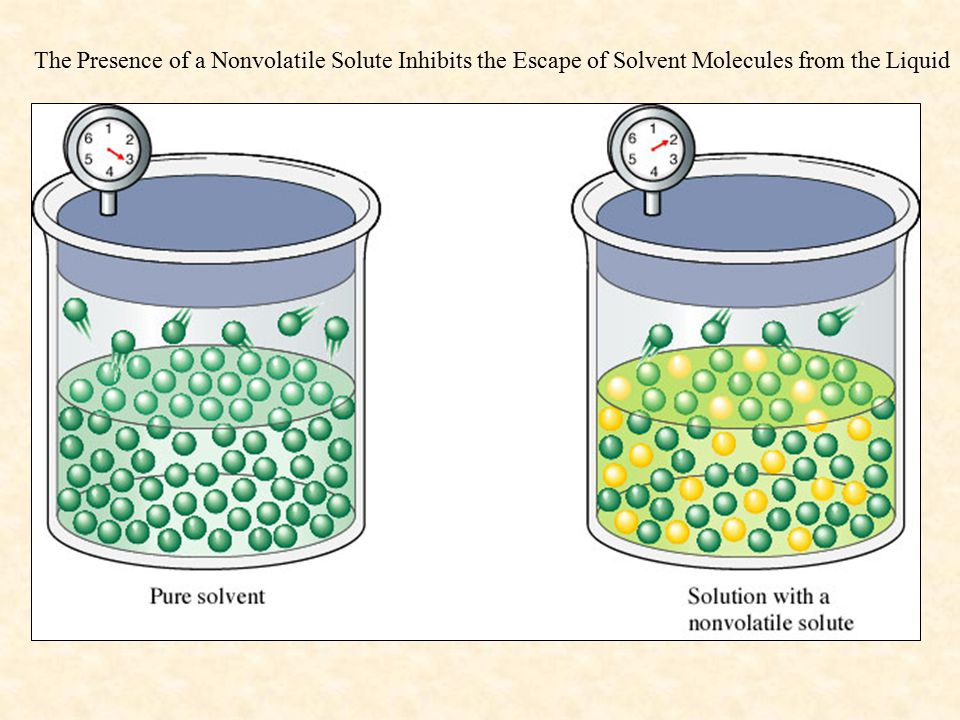 The Presence of a Nonvolatile Solute Inhibits the Escape of Solvent Molecules from the Liquid