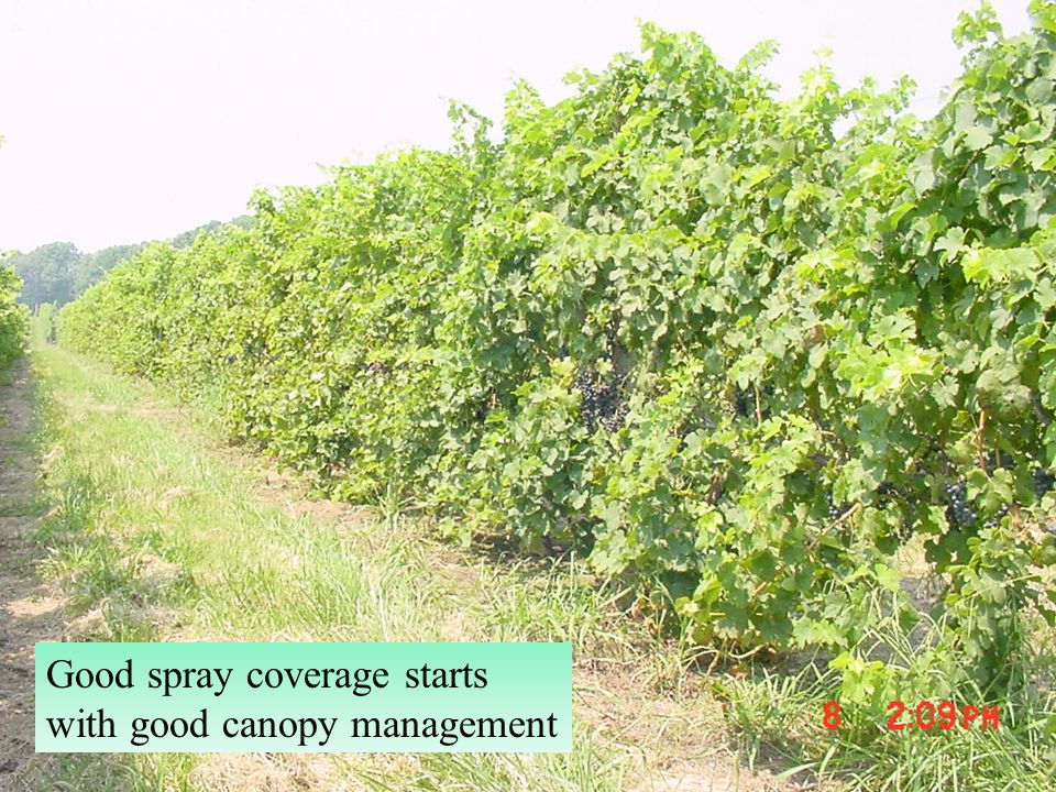 Good spray coverage starts with good canopy management