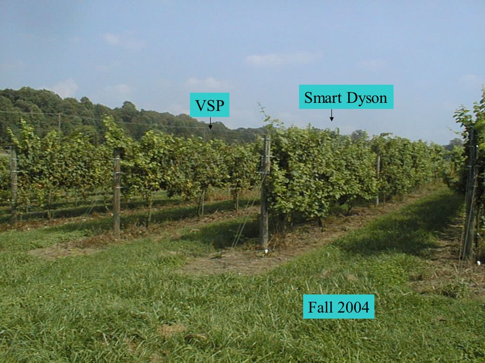 Smart Dyson VSP Fall 2004