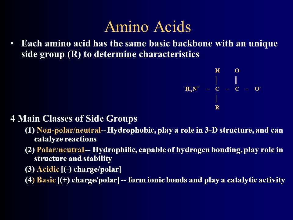 Amino Acids Each amino acid has the same basic backbone with an unique side group (R) to determine characteristics.
