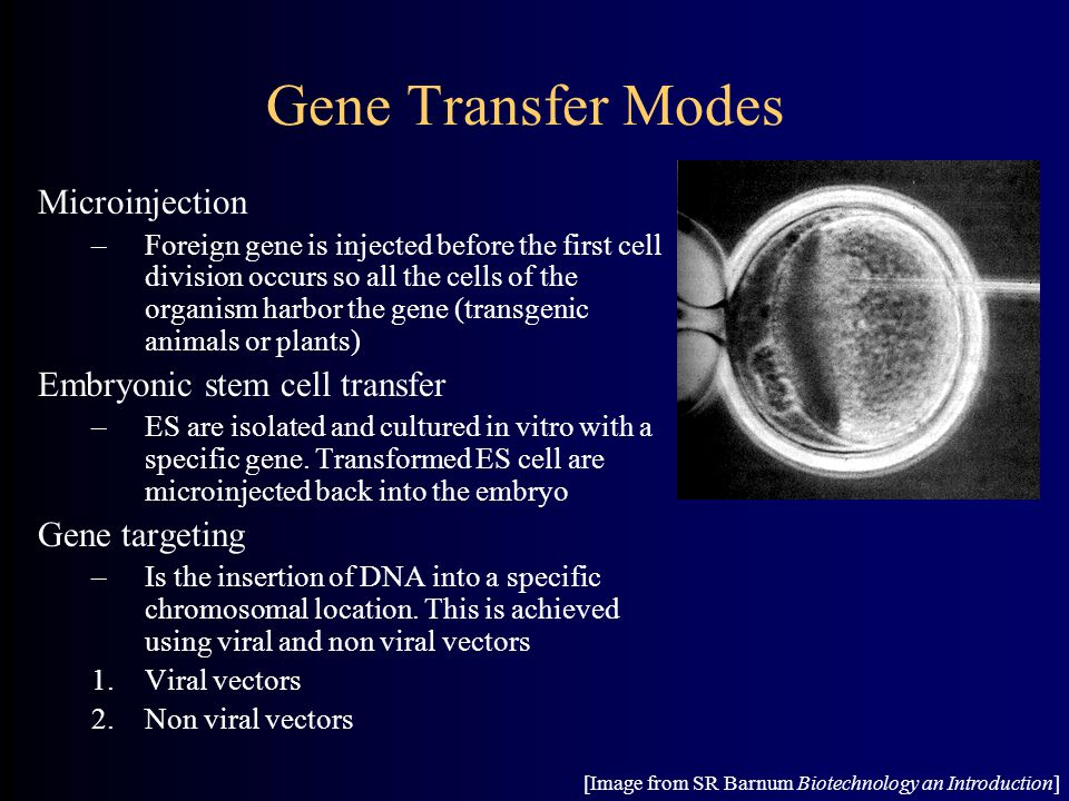 Gene Transfer Modes Microinjection Embryonic stem cell transfer