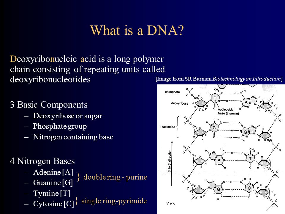 What is a DNA Deoxyribonucleic acid is a long polymer chain consisting of repeating units called deoxyribonucleotides.