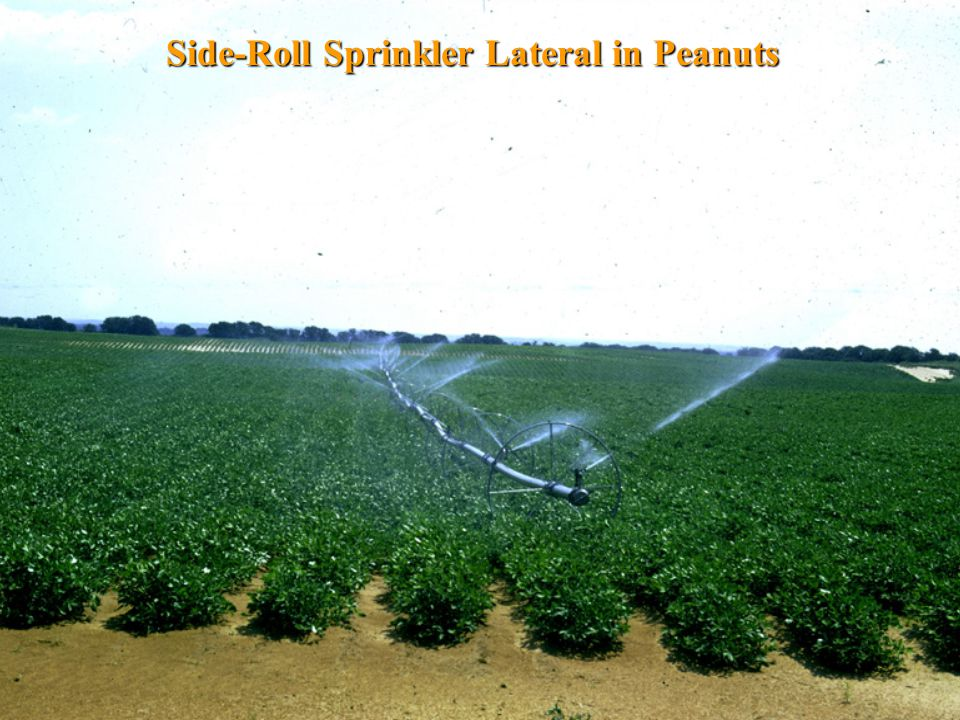 Side-Roll Sprinkler Lateral in Peanuts