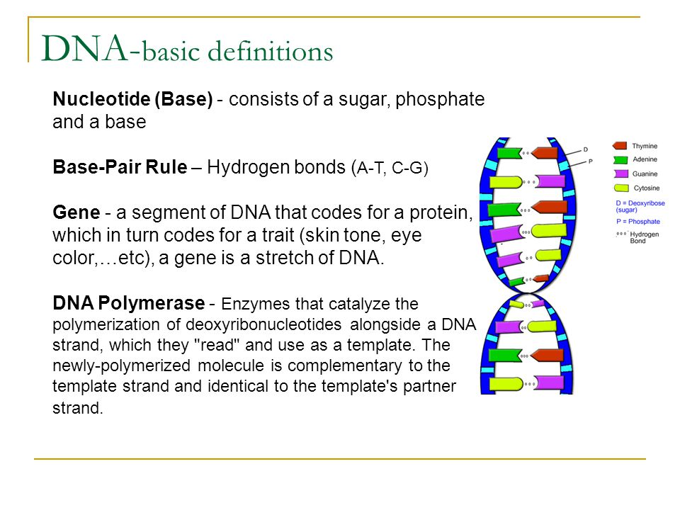 DNA-basic definitions