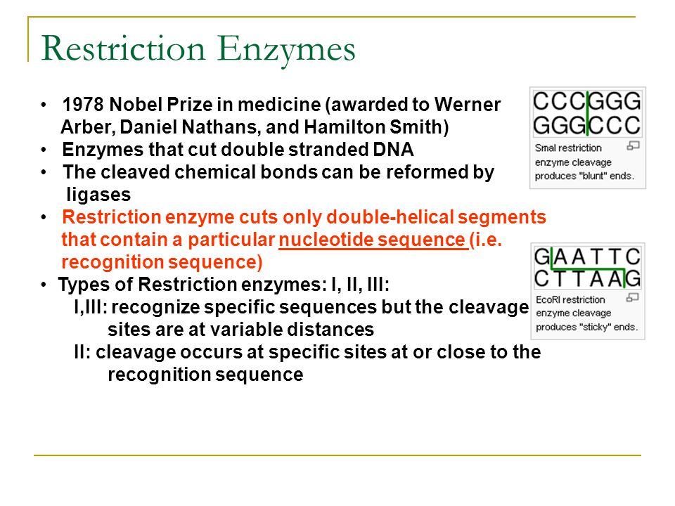 Restriction Enzymes 1978 Nobel Prize in medicine (awarded to Werner