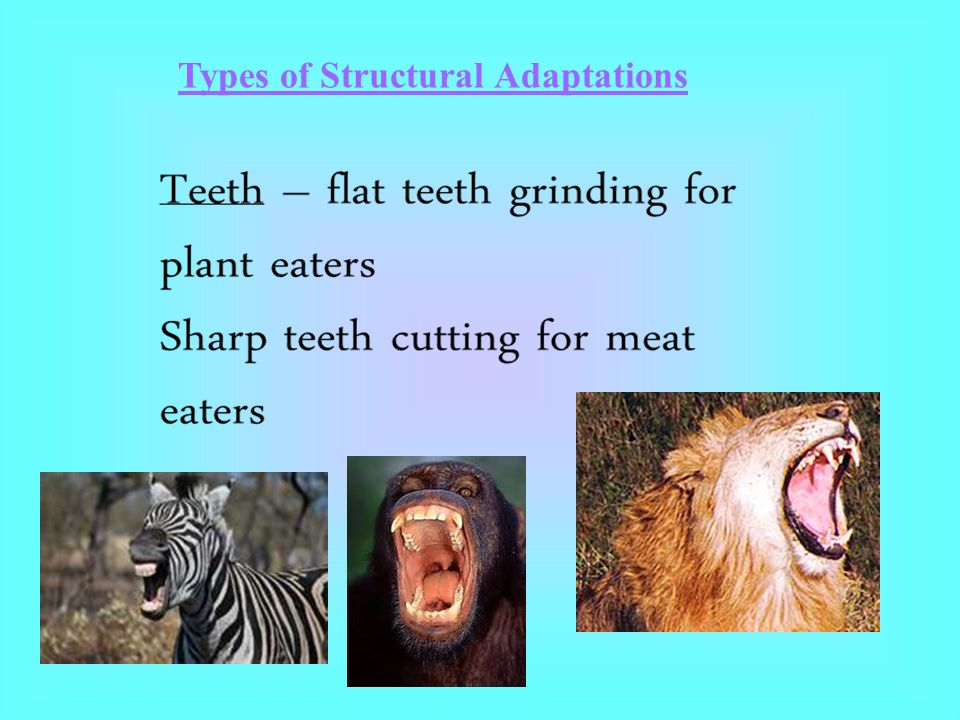 Types of Structural Adaptations