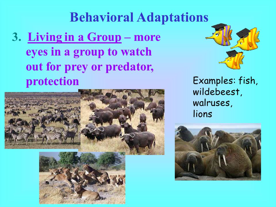 Behavioral Adaptations