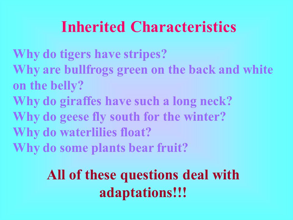 All of these questions deal with adaptations!!!