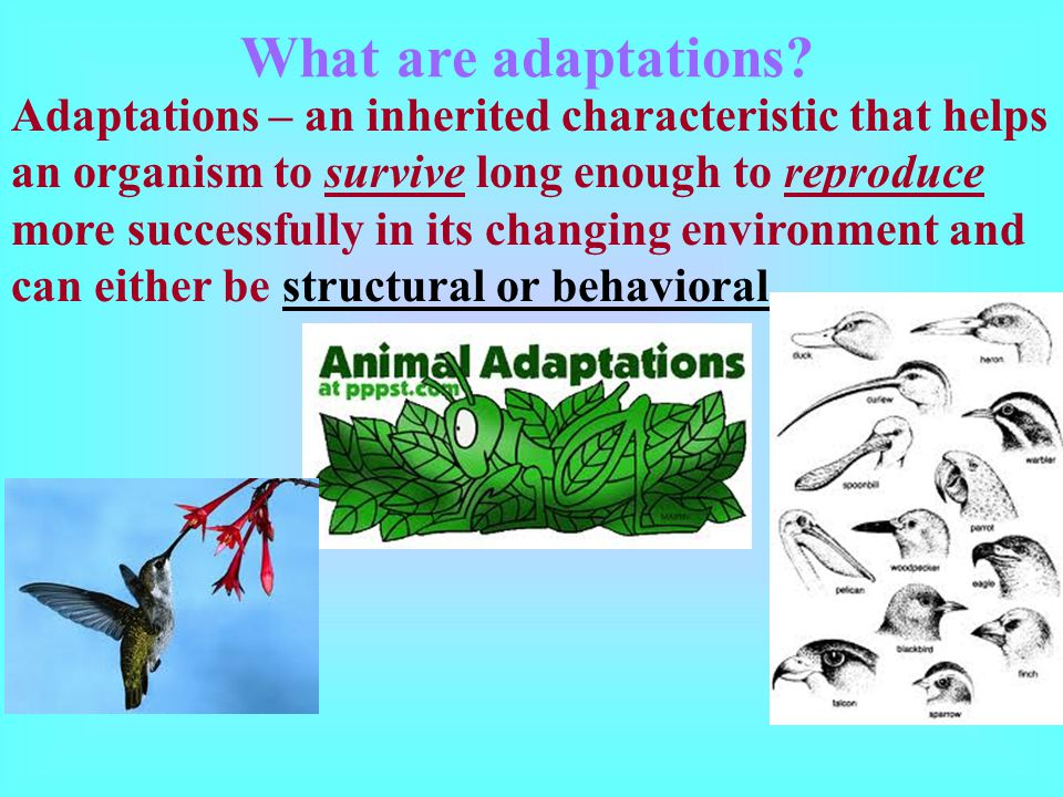 What are adaptations