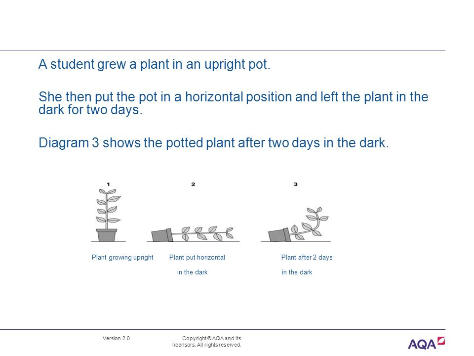 Diagram 3 shows the potted plant after two days in the dark.