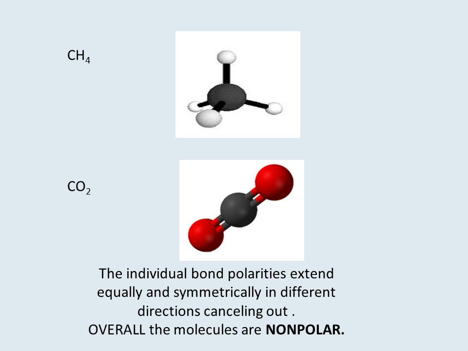 OVERALL the molecules are NONPOLAR.