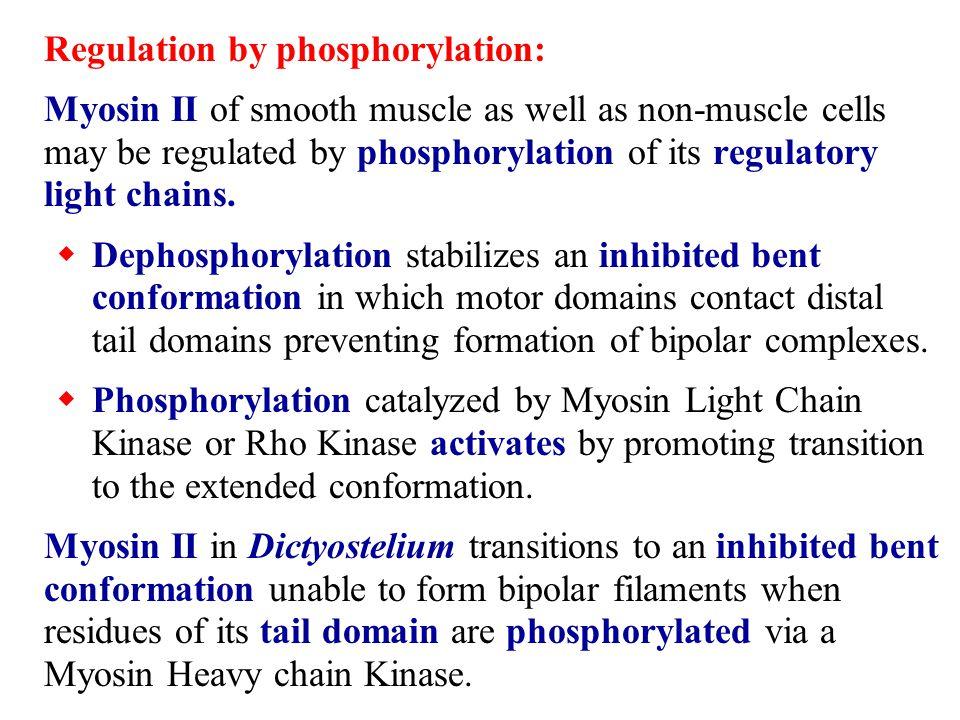 Regulation by phosphorylation: