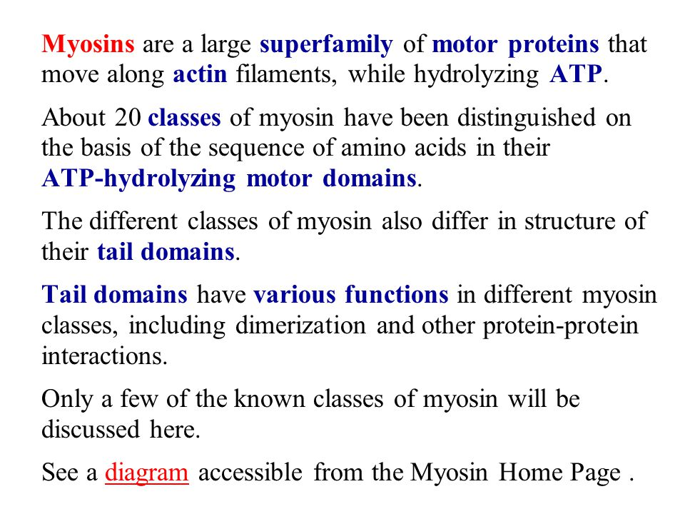 Myosins are a large superfamily of motor proteins that move along actin filaments, while hydrolyzing ATP.