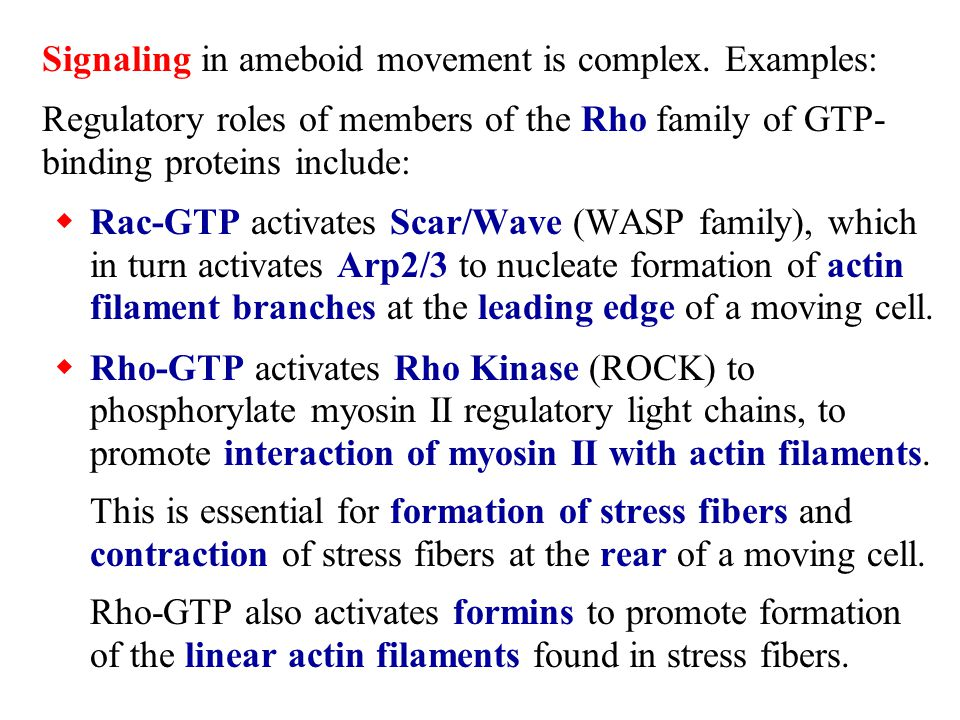 Signaling in ameboid movement is complex. Examples: