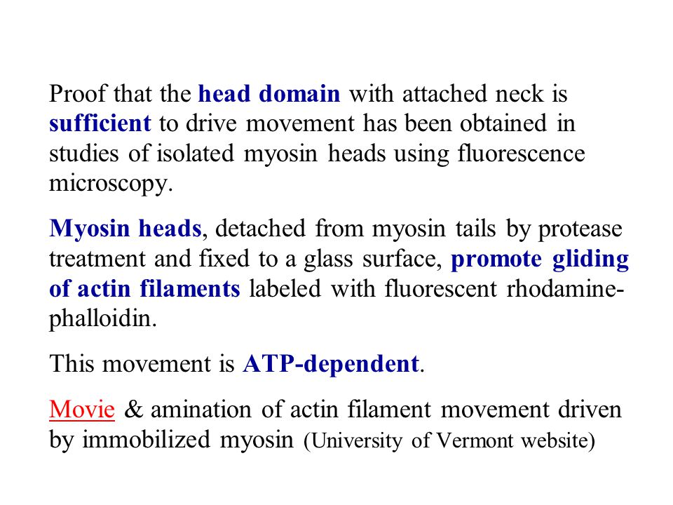 Proof that the head domain with attached neck is sufficient to drive movement has been obtained in studies of isolated myosin heads using fluorescence microscopy.