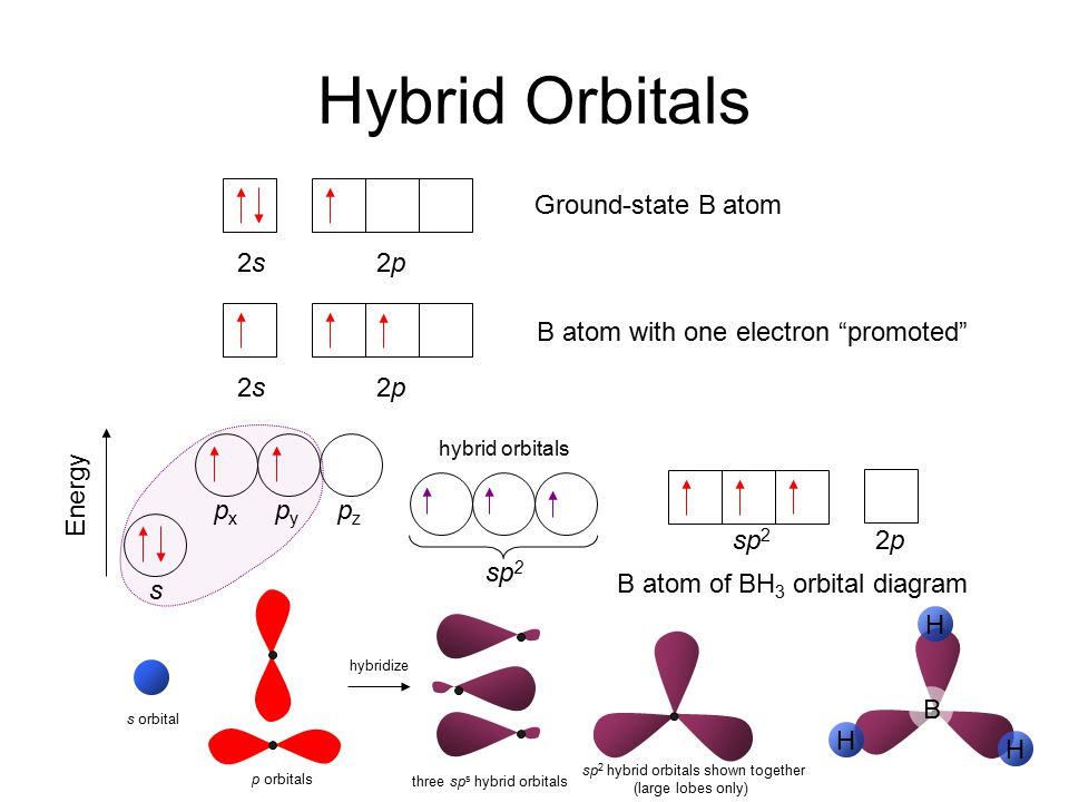 sp2 hybrid orbitals shown together