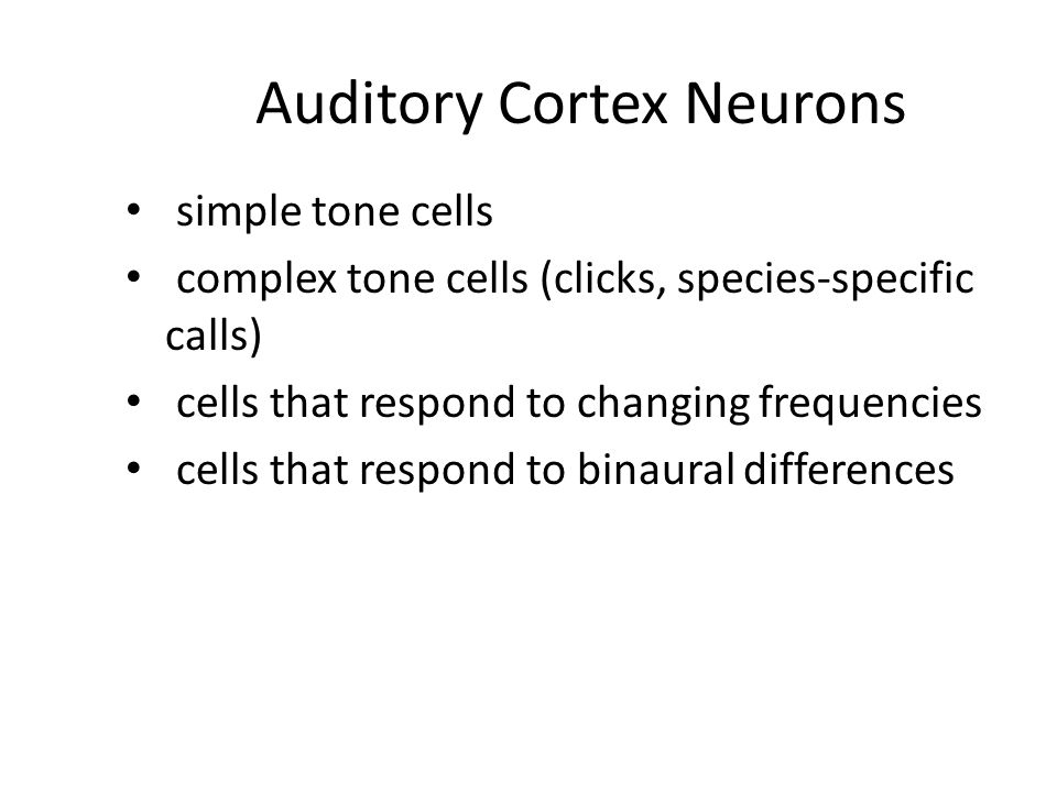 Auditory Cortex Neurons