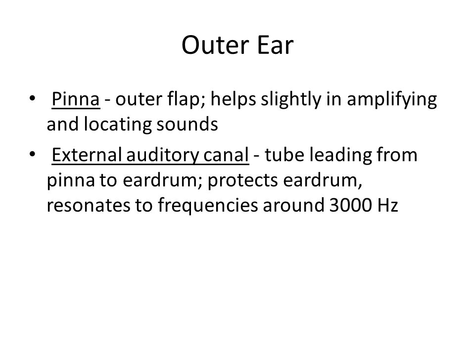 Outer Ear Pinna - outer flap; helps slightly in amplifying and locating sounds.