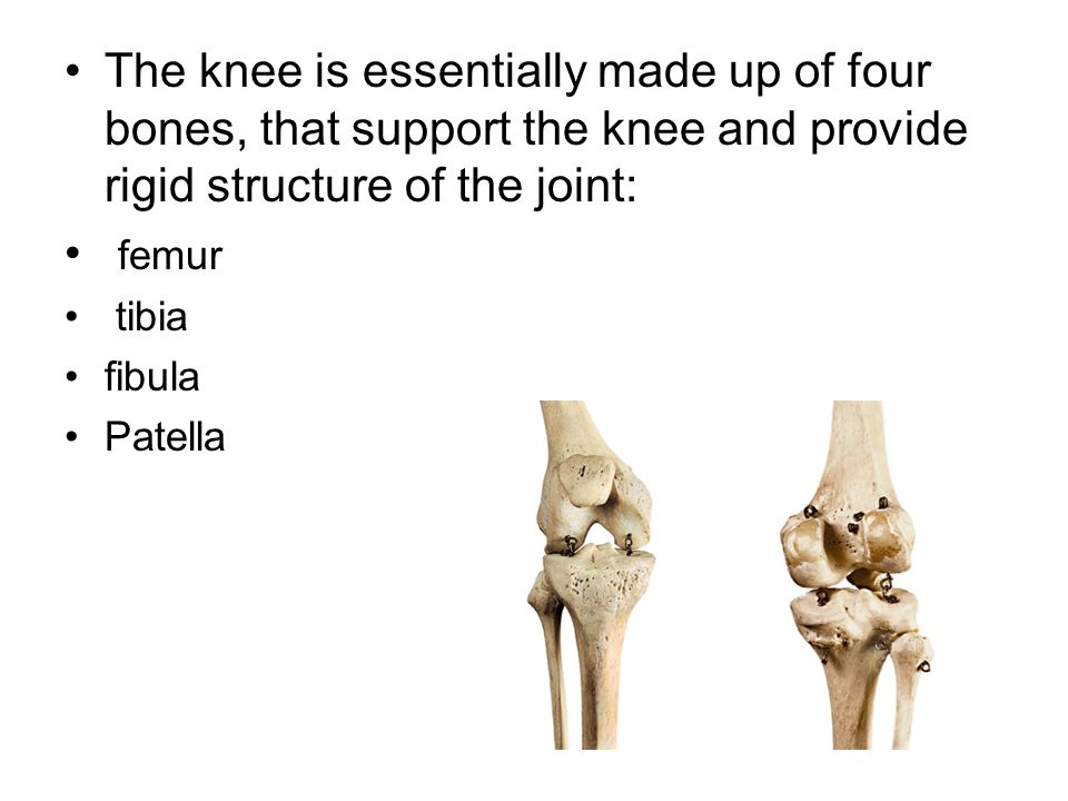 The knee is essentially made up of four bones, that support the knee and provide rigid structure of the joint: