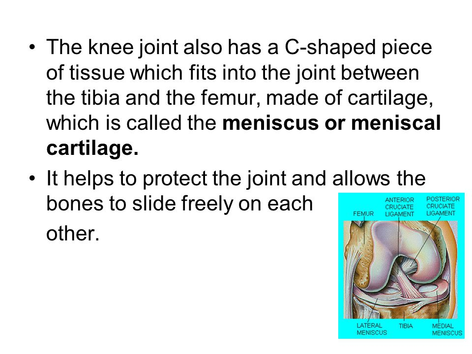 The knee joint also has a C-shaped piece of tissue which fits into the joint between the tibia and the femur, made of cartilage, which is called the meniscus or meniscal cartilage.