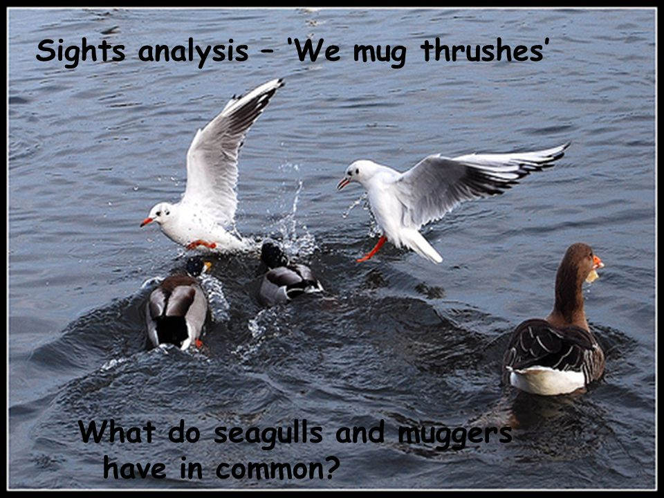 Sights analysis – 'We mug thrushes'