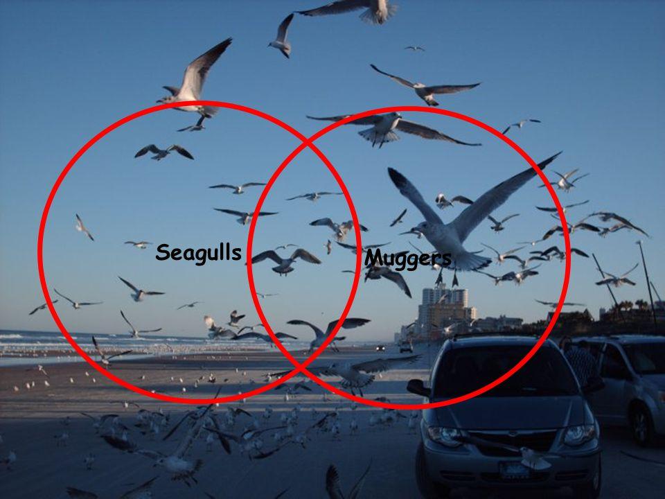 Seagulls Muggers