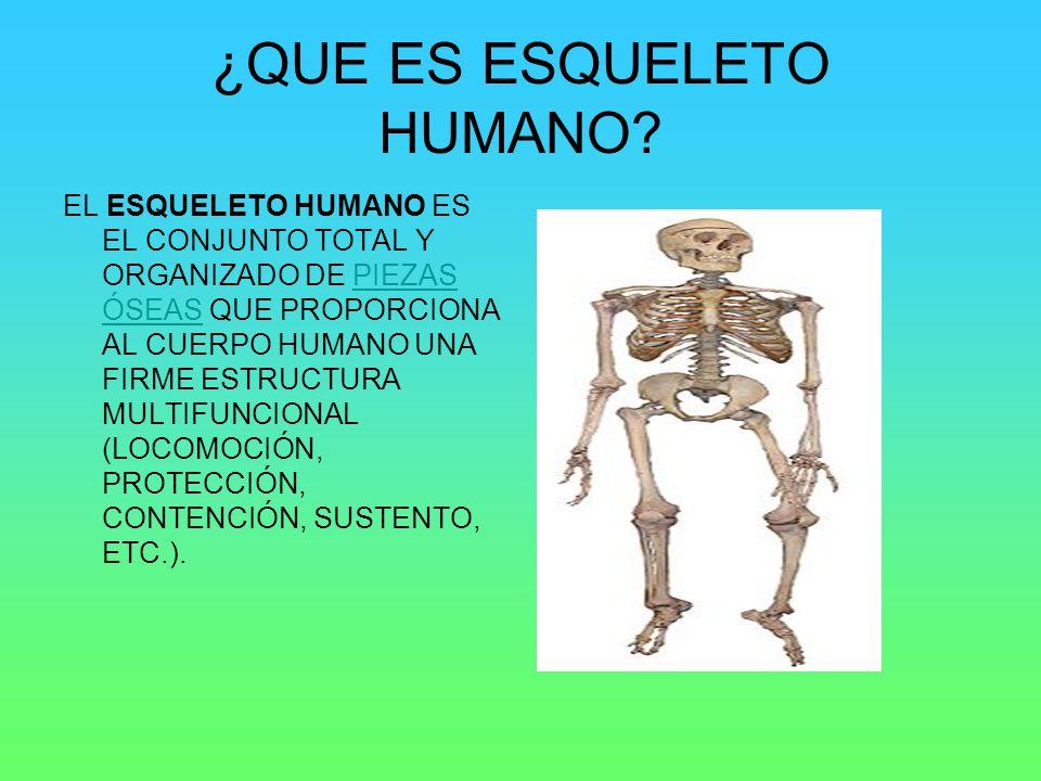 ¿QUE ES ESQUELETO HUMANO