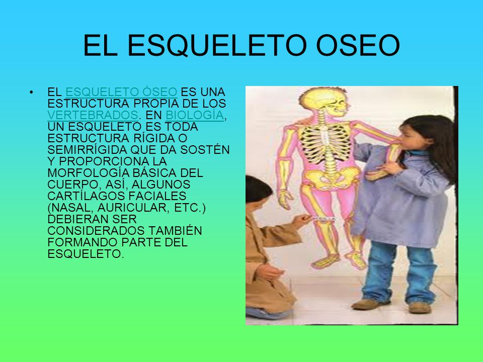 EL ESQUELETO OSEO