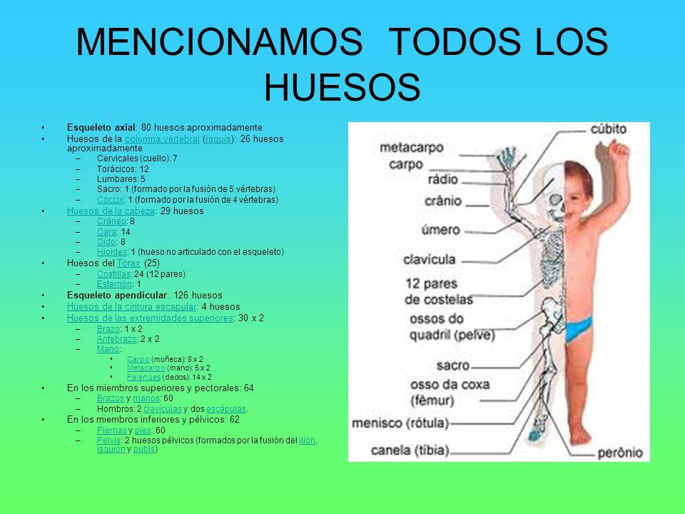 MENCIONAMOS TODOS LOS HUESOS