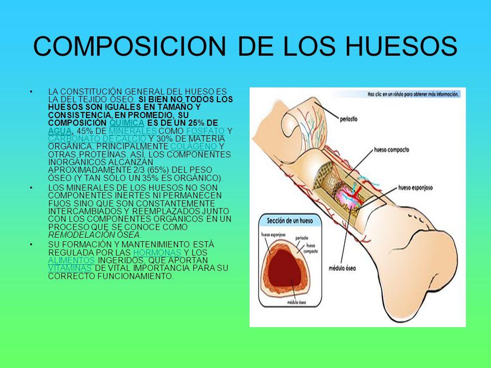 COMPOSICION DE LOS HUESOS
