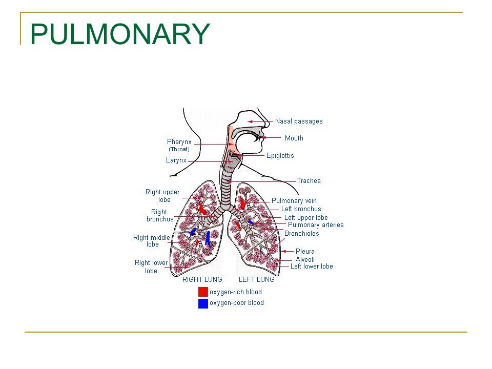 PULMONARY Use to show where