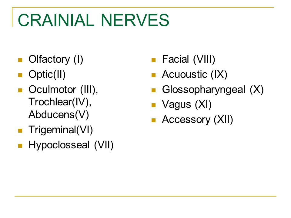 CRAINIAL NERVES Olfactory (I) Optic(II)