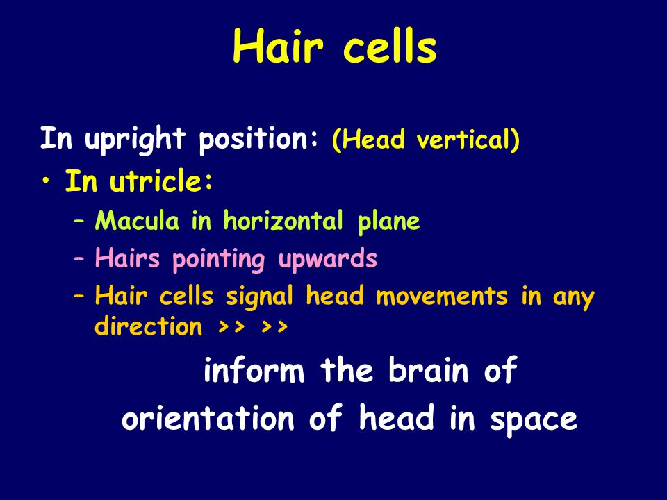 orientation of head in space