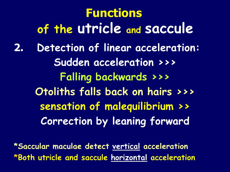 Functions of the utricle and saccule