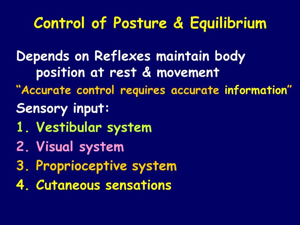 Control of Posture & Equilibrium