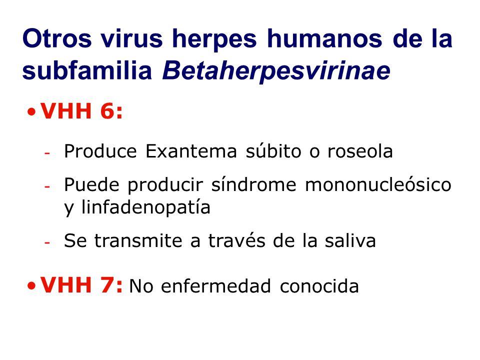 Otros virus herpes humanos de la subfamilia Betaherpesvirinae