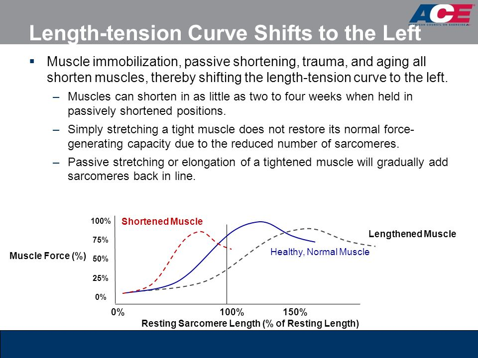 Length-tension Curve Shifts to the Left
