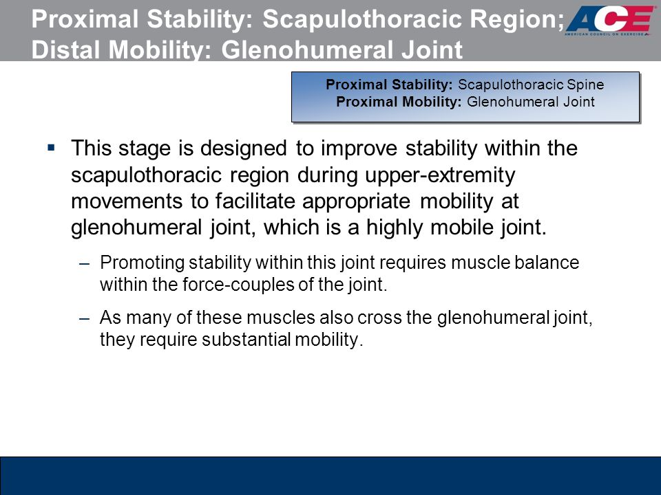 Proximal Stability: Scapulothoracic Region; Distal Mobility: Glenohumeral Joint