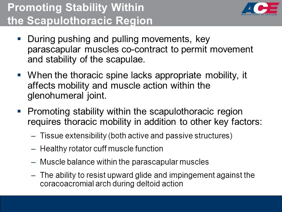 Promoting Stability Within the Scapulothoracic Region