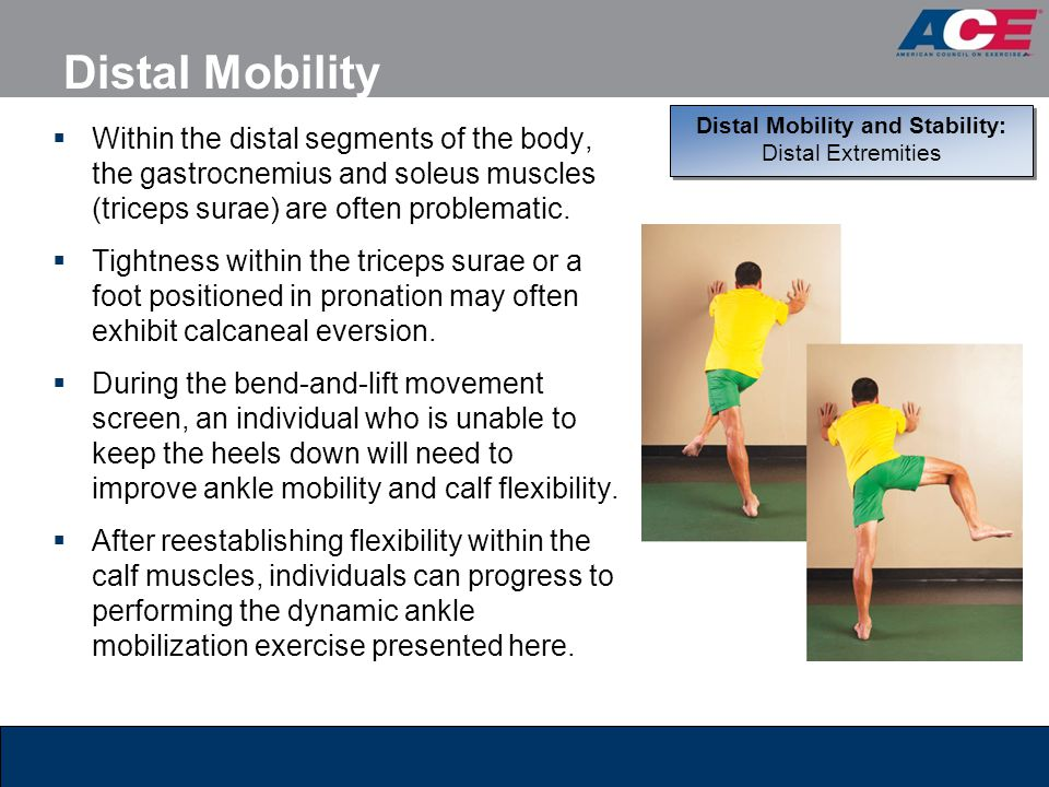 Distal Mobility and Stability: