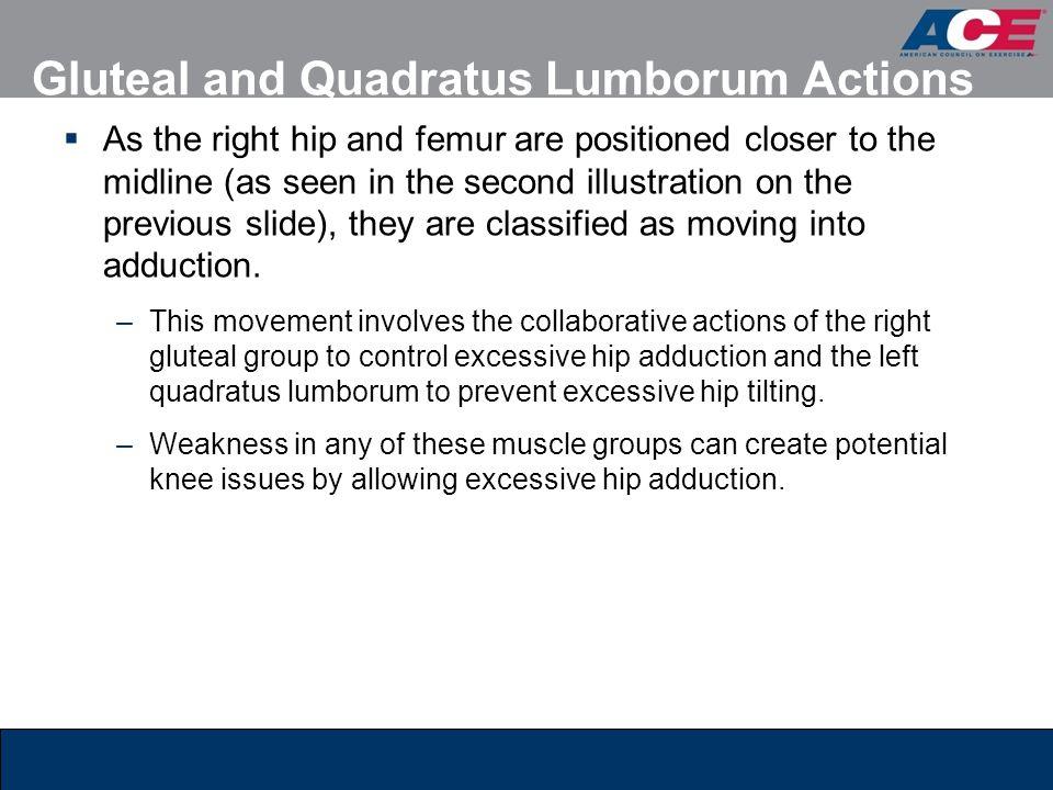 Gluteal and Quadratus Lumborum Actions