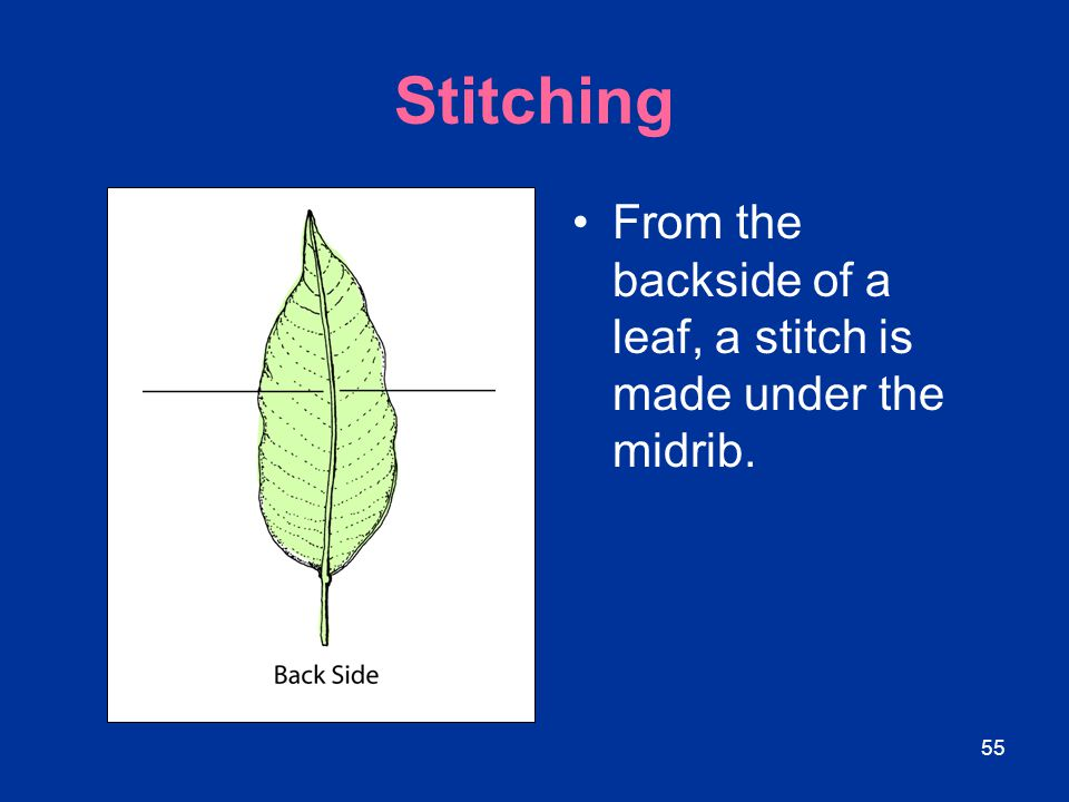 Stitching From the backside of a leaf, a stitch is made under the midrib.