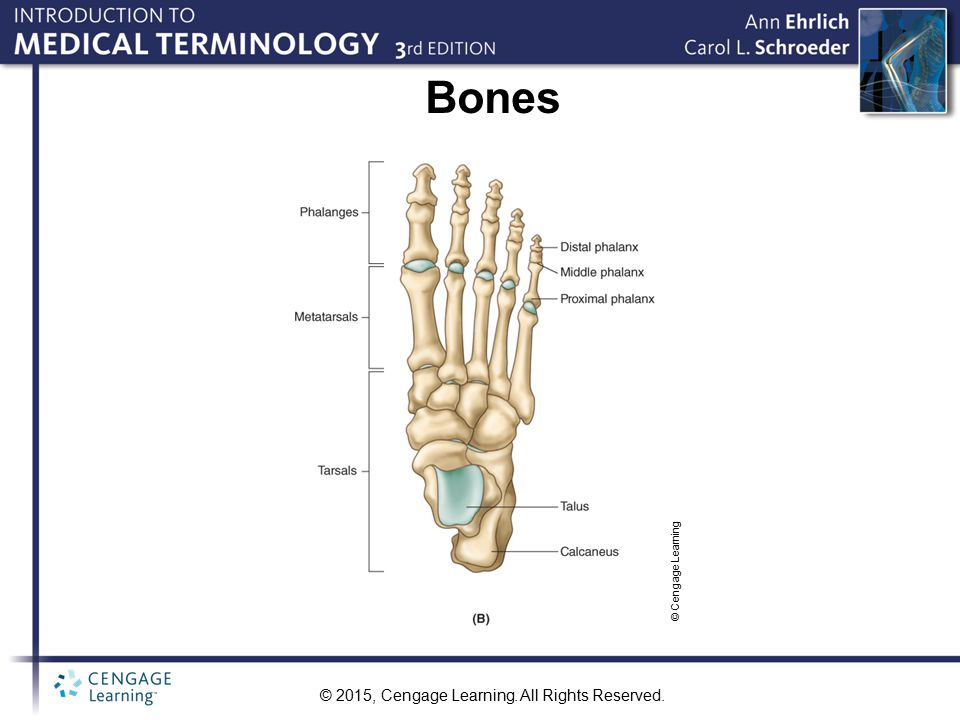 Bones © Cengage Learning