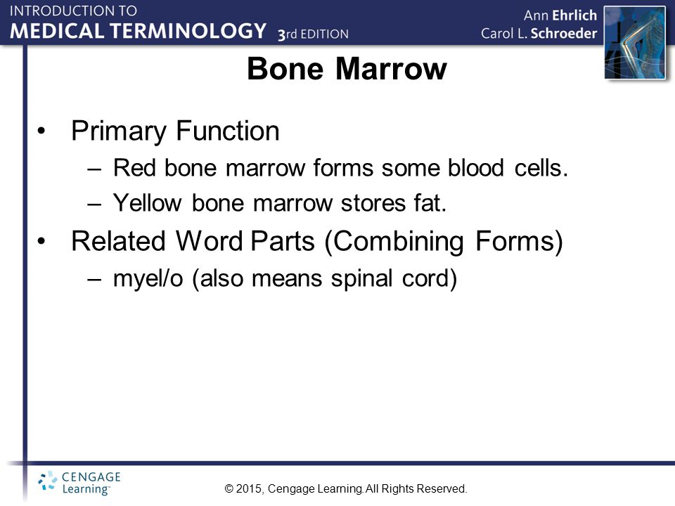 Bone Marrow Primary Function Related Word Parts (Combining Forms)