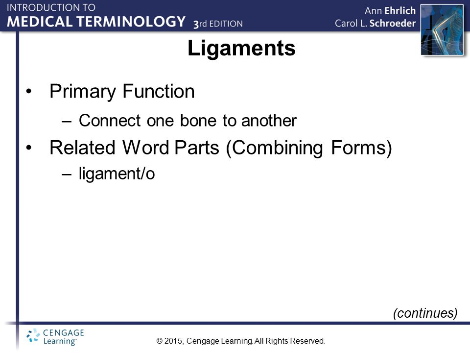 Ligaments Primary Function Related Word Parts (Combining Forms)