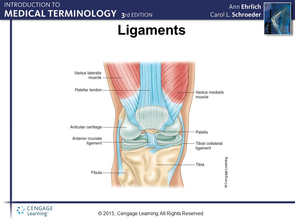 Ligaments © Cengage Learning